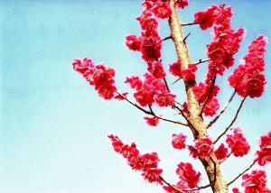 空と梅の花